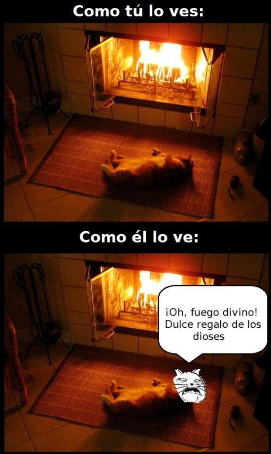 calor,fuego,Gatos,hoguera,lumbre,Sweet Jesus