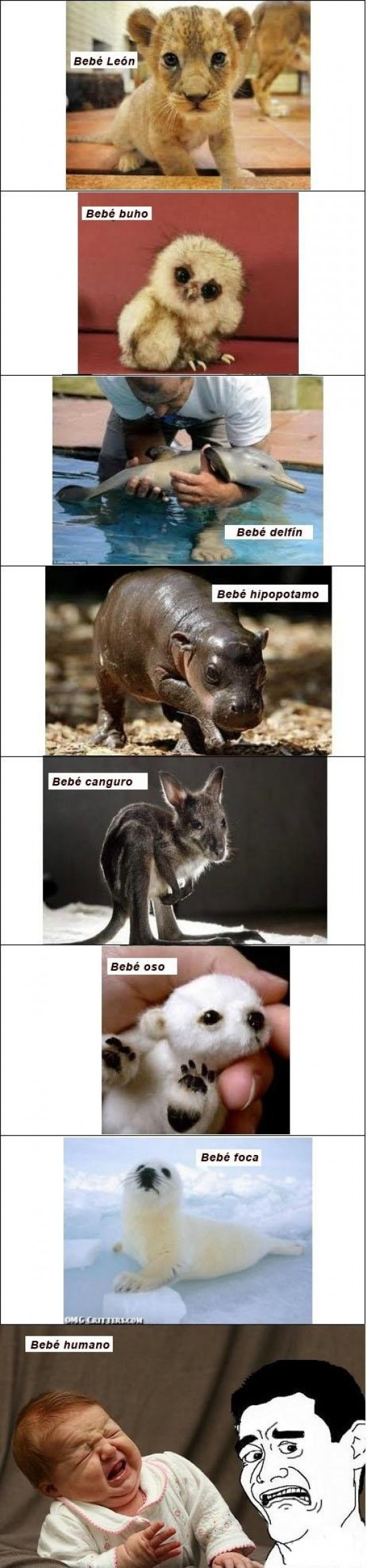 bebés animales,buho,canguro,delfín,foca,hipopotamo,humano,león,oso,yao ming
