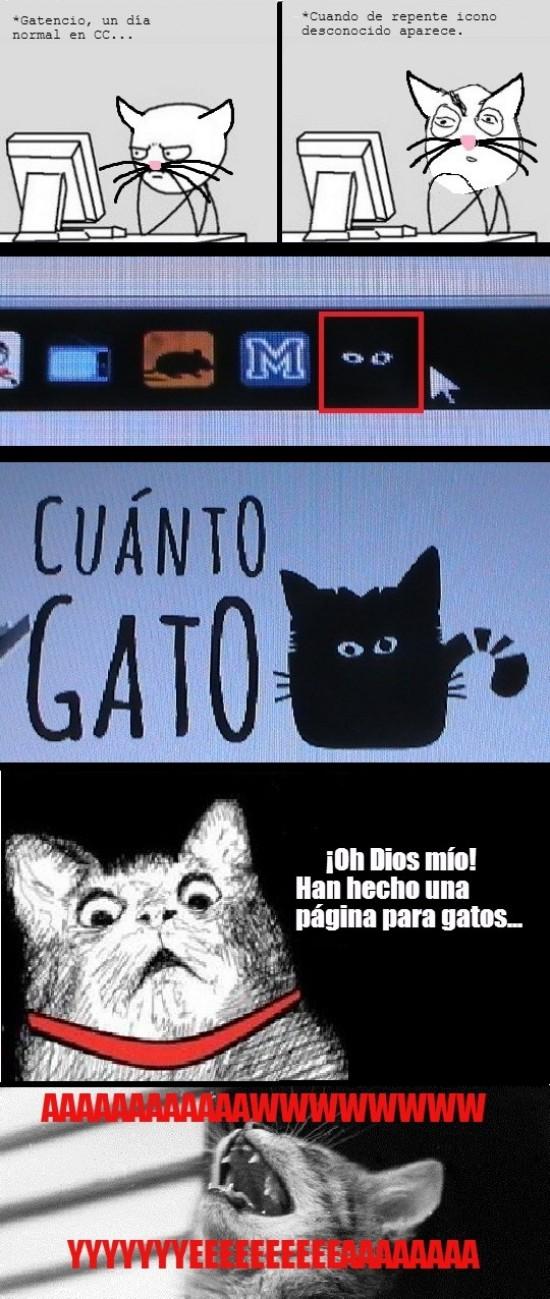 Aww_yea - Cuánto gato