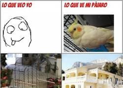 Enlace a Diferencias entre mi pájaro y yo