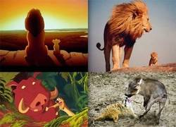 Enlace a Disney Vs Realidad