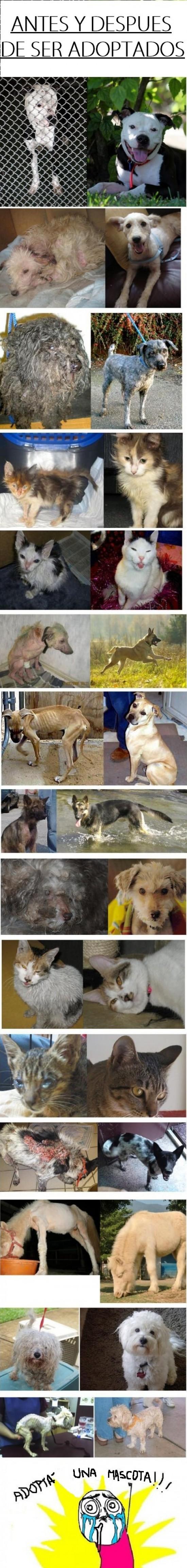 Otros - ¡Adopta una mascota!