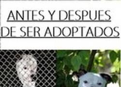 Enlace a ¡Adopta una mascota!
