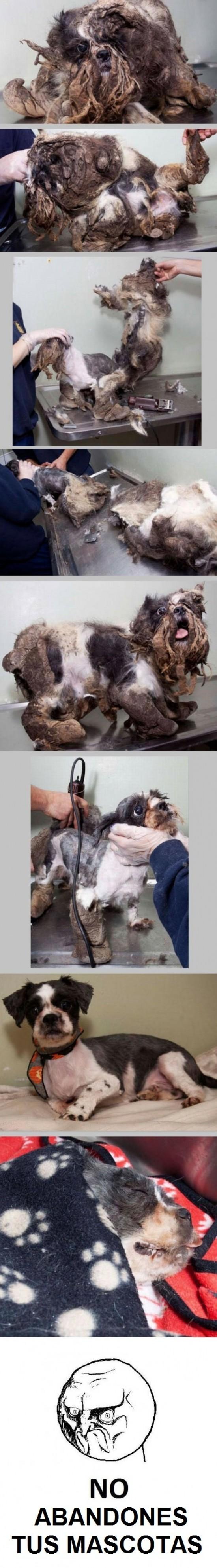 abandono,cuidado,mascotas,mejor amigo,perros