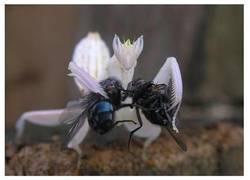 Enlace a Now kiss, versión mantis
