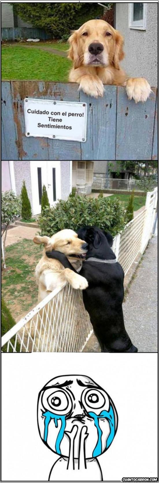 abrazo,cry,perro,sentimientos