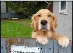 Enlace a Cuidado con el perro