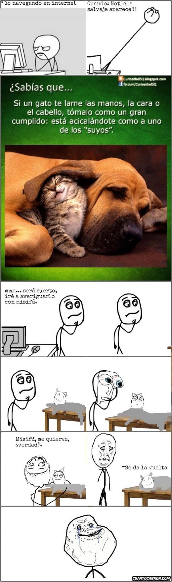 Forever_alone - Puede que ese gato te quiera más que todos tus conocidos