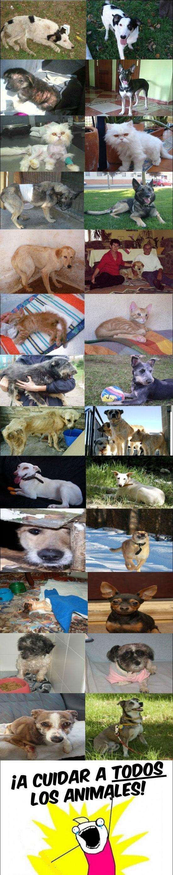 adopta,all the things,animales,antes y después,cuida,gatos,perros