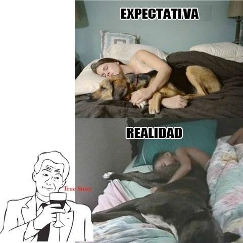 abrazar,dormir,perro,true story