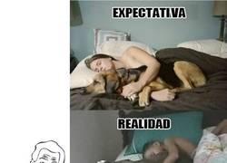 Enlace a Dormir con tu perro