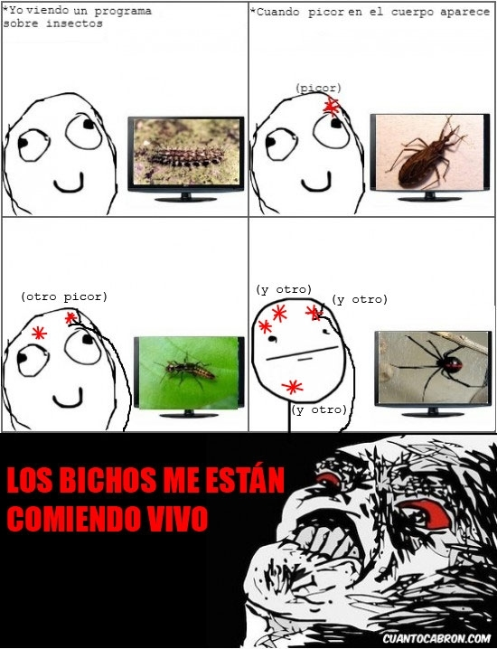 insectos,paranoia,pokerface,television