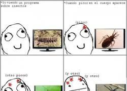 Enlace a Oír hablar de insectos y empieza el picor