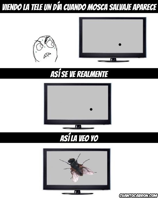 CC,Fuuuuu,Memes,Mosca,Television,TV