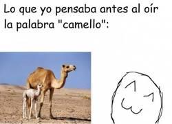 Enlace a Los camellos antes y ahora