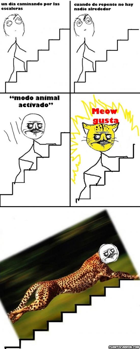 escaleras,guepardo,me gusta,modo animal activado,subir