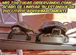 Enlace a Tortugas Troll