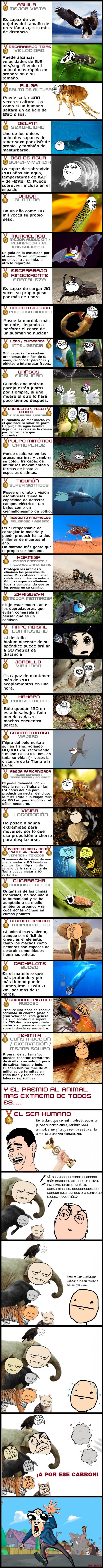 Otros - Los animales más extremos (con memes)