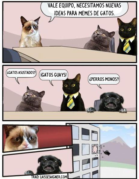 Otros - Internet es para los gatos
