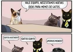 Enlace a Internet es para los gatos