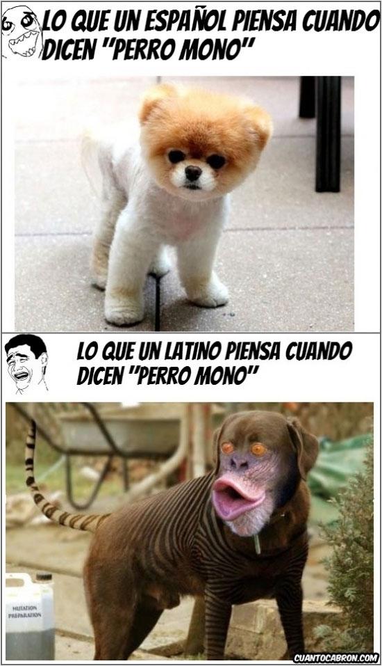 Yao - Perro mono desde distintos puntos de vista