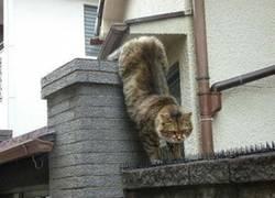 Enlace a Prueba de amor felina