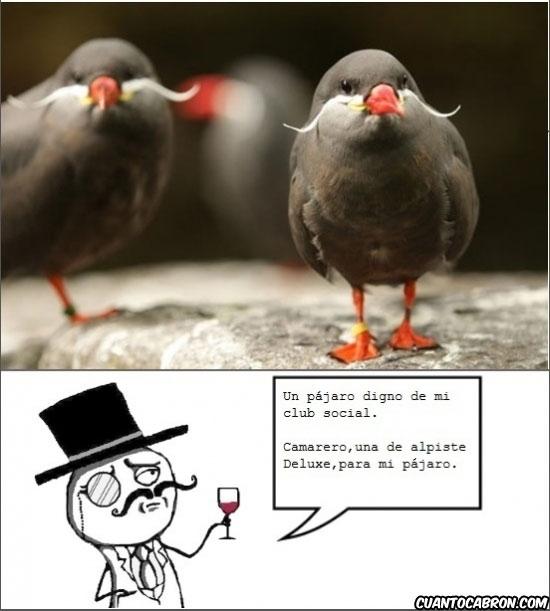 Feel_like_a_sir - El pájaro digno de un Sir