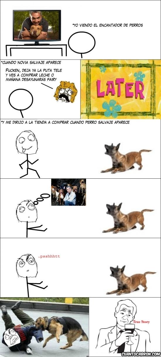 Ffffuuuuuuuuuu - Las consecuencias de ver el encantador de perros
