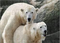 Enlace a Casquete polar