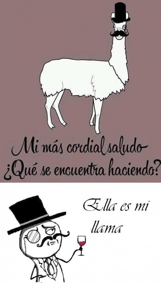 feel like a sir,Llama,Nombre científico,ola k ase?