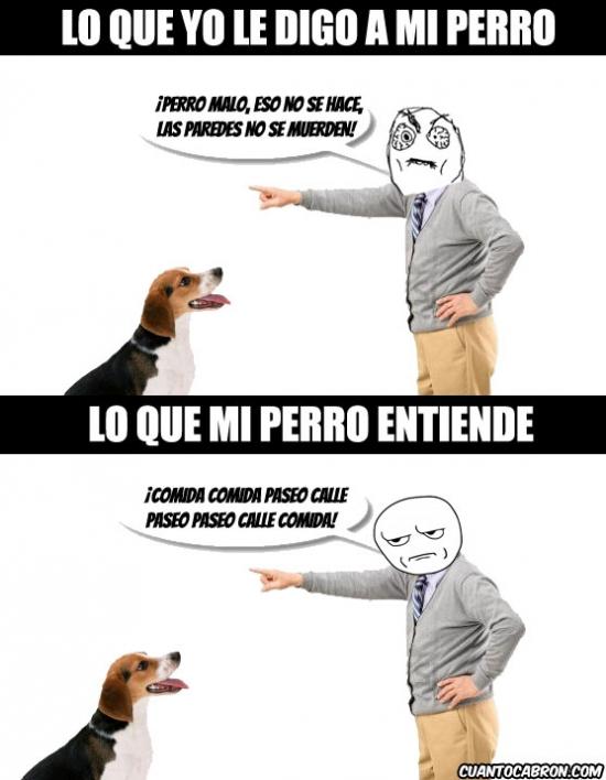 Kidding_me - Lo que entiende el perro cuando le hablas