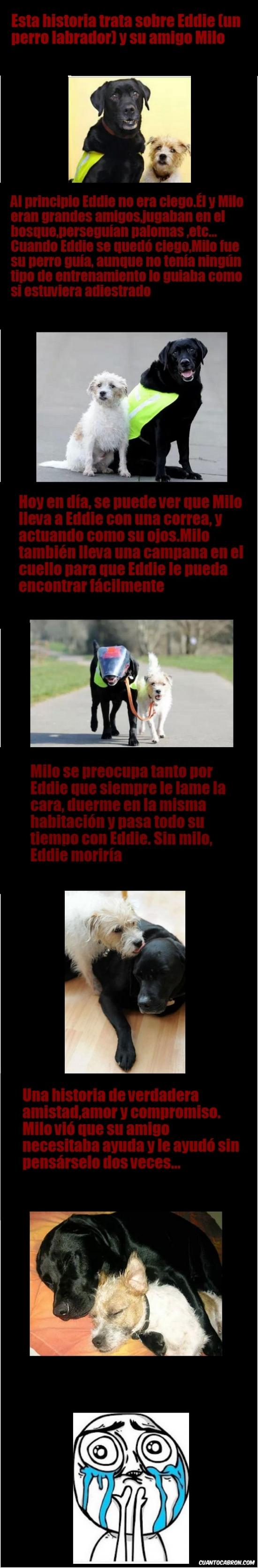 amigo,Eddie,Milo,mom please,perro,please mom,so much joy