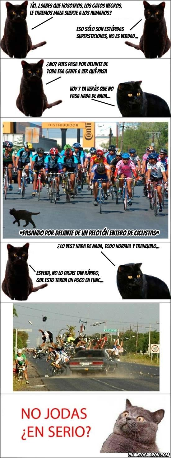 accidente,atropello,choque,ciclistas,cruzar,Gato,mala suerte,negro