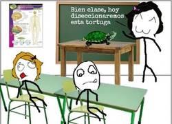Enlace a El esqueleto de la tortuga