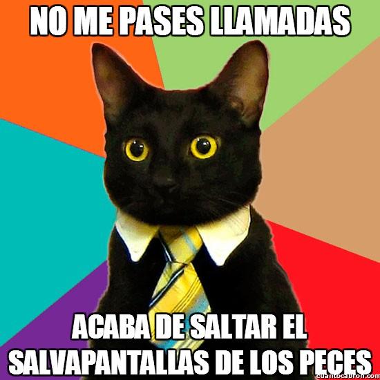 Gato_empresario - El gato empresario, siempre tan ocupado