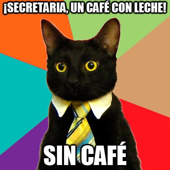 Gato_empresario - Ya sabéis las preferencias de los gatos
