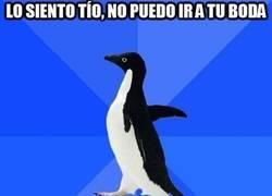 Enlace a El pingüino de las situaciones incómodas siempre sabe cómo quedar bien con sus amigos