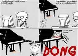 Enlace a Tener un gato y un piano no es una buena combinación