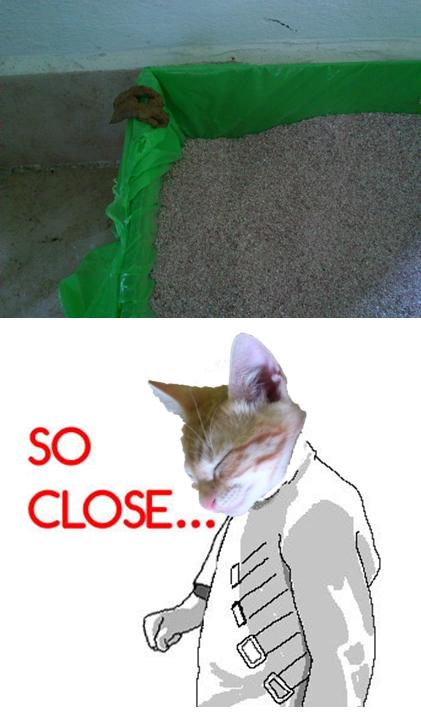caja de arena,freddie,gato,so close,tan cerca
