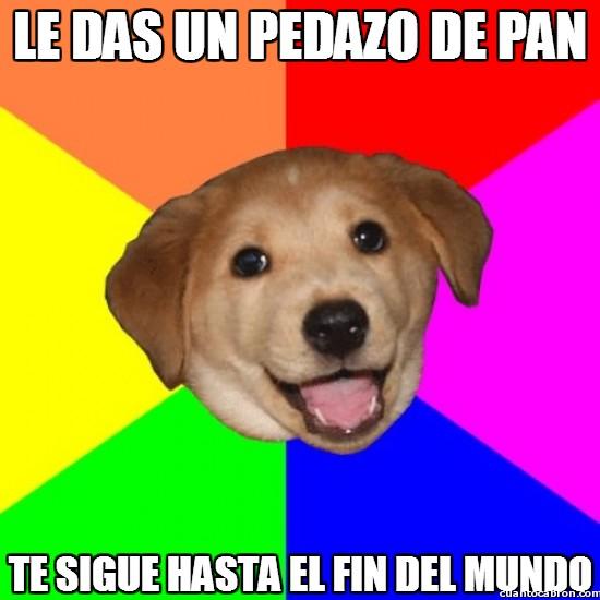 advice dog,cachorro,mundo,pan,perro