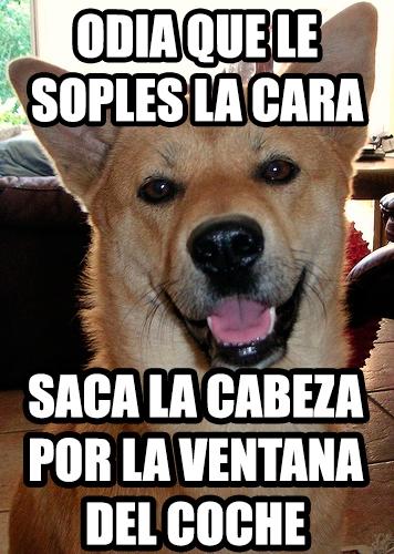 cara,enfado,perro,soplar,ventana coche