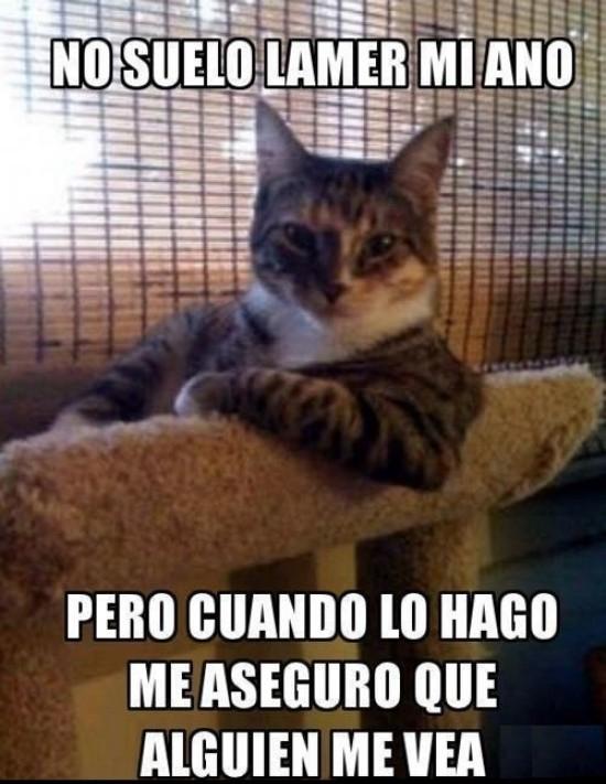 El_hombre_mas_interesante_del_mundo - Siempre en el peor momento, el gato del hombre más interesante del mundo
