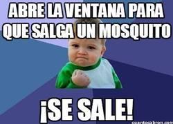 Enlace a Abre la ventana para que salga un mosquito