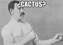 Enlace a ¿Cactus?