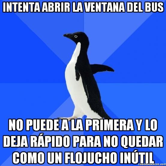 Awkward_penguin - Las ventanas del bus, mejor dejarlas como están
