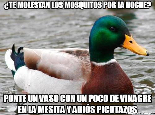 Pato_consejero - ¿Te molestan los mosquitos por la noche?