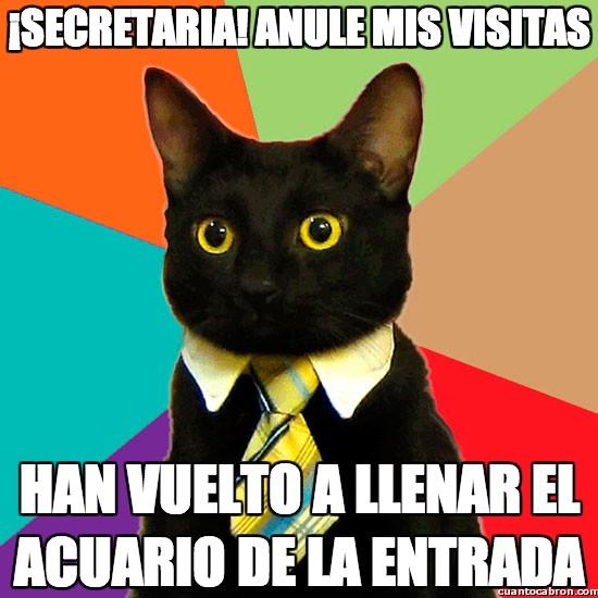 Gato_empresario - ¡Secretaria! anule mis visitas