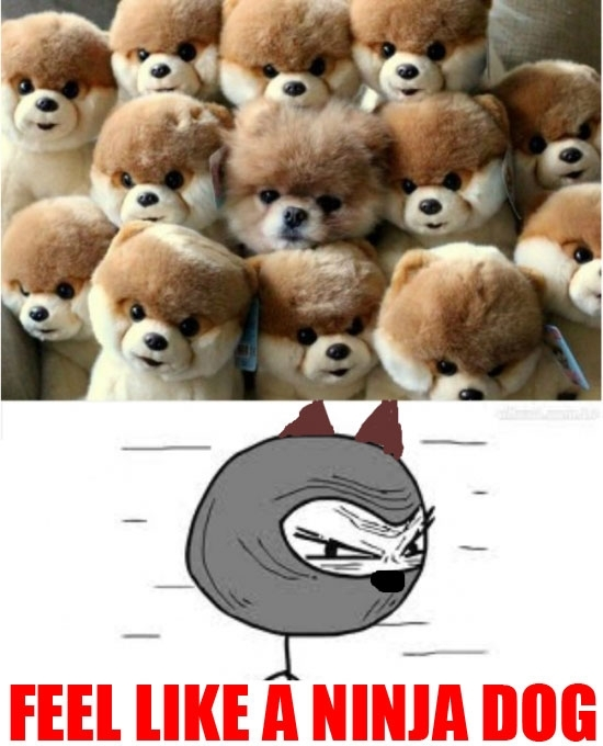 Feel_like_a_ninja - Los perros también pueden ser muy ninjas