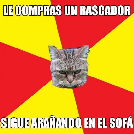 Meme_otros - La naturaleza del gato es ignorarlo todo