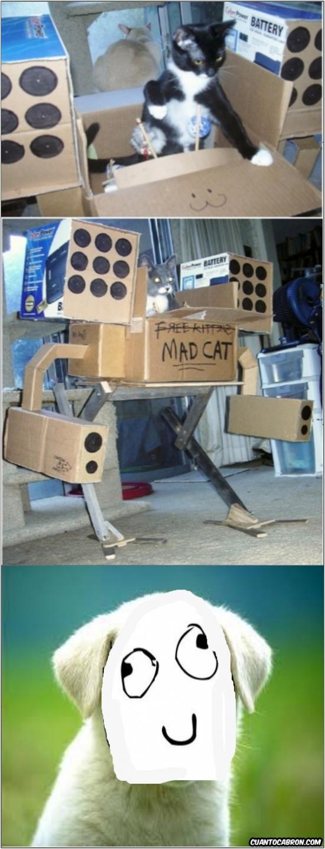 Otros - Los gatos han empezado a darle un uso más bélico a las cajas de cartón